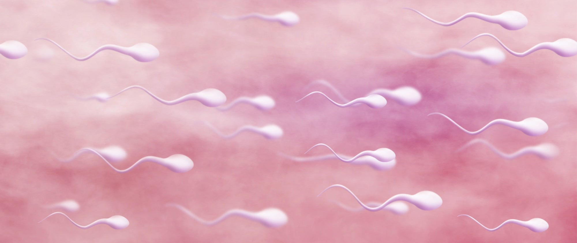healthy sperm swimming